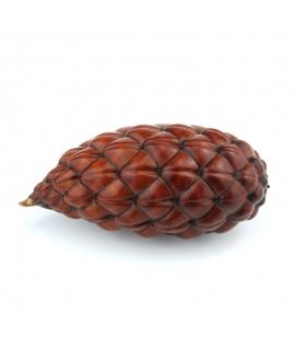Piña Thika 8-12 cm